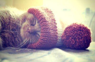 46906-Sleeping-Cat