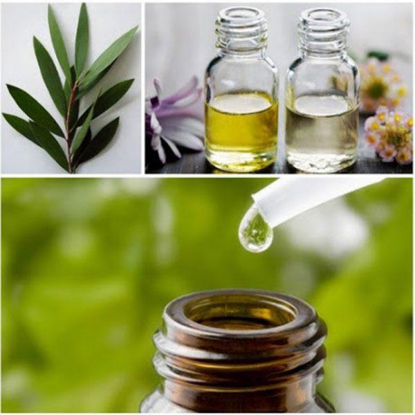 tea-tree-oil-478752_w1000